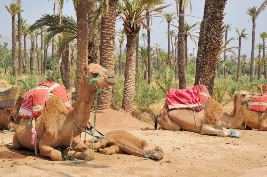 holiday to marrakech morocco